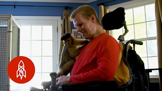 Download After an Injury, These Primates Will Lend a Helping Hand Video