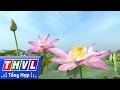 Download THVL l Nhịp sống đồng bằng: Tết với đồng sen Video