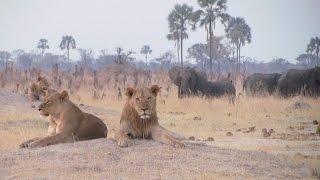 Download Hwange National Park, Zimbabwe Video