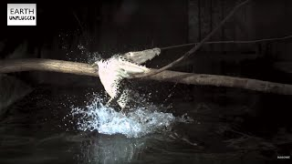 Download Crocodile Attack In Slow Motion - BBC Earth Video