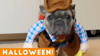 Download Funniest Halloween Pets Compilation of 2018 | Funny Pet Videos Video