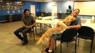 Download Service Dogs For The Disabled Video