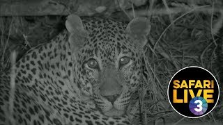 Download safariLIVE on SABC 3 - Episode 1 Video