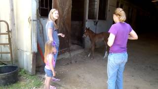 Download Foal cries, mom comes running. Video