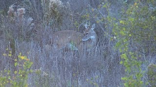 Download Oh deer... bow hunting Hill Country whitetail! Video