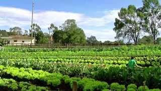 Download Cómo Administrar un Granja Agrícola Orgánica - TvAgro por Juan Gonzalo Angel Video