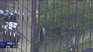 Download Dallas office tower murder suicide Video