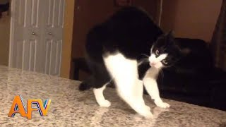 Download 101 SUPER Weird Cats | AFV Funniest Cat Videos 2018 Video