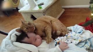 Download 【猫と赤ちゃん】赤ちゃんと添い寝し、赤ちゃんをあやす猫に胸キュン!ほっこり動画まとめ【可愛い】Sweet cat and baby compilation Video
