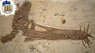 Download 15 Unbelievable Fossil Discoveries Video