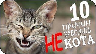 Download 10 причин не заводить кота Video