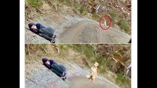 Download 裝死給「不讓人靠近的兇狗看」會發生什麼事? Video