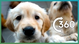 Download ADORABLE Puppy Guide Dogs In 360° - Earth Unplugged Video