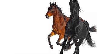 Download Lil Nas X - Old Town Road ft Billy Ray Cyrus Remix Video
