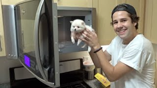 Download PUTTING A PUPPY INTO THE MICROWAVE!! | David Dobrik Video