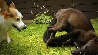 Download Funny Pets Fails 😂🐶 Funny Dogs Who Fail at Being Dogs (Part 1) [Funny Pets] Video