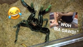 """Download Arachnophobic friend FEEDS my TARANTULAS for the FIRST TIME ~ """"Whoaa my goshhh!!!"""" Video"""