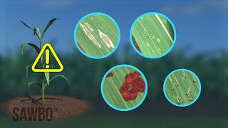 Download How to Identify and Scout for Fall Armyworm in English (accent from USA) Video