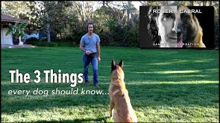 Download The Most Important Things to Teach Your Dog- Robert Cabral Dog Training #4 Video
