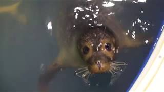 Download Seal rehab and release Video