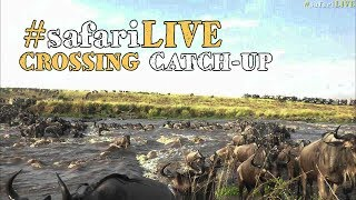 Download The wildebeest have arrived in their thousands at the Mara River! Video