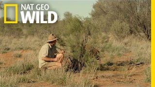 Download Raging Roger the Kangaroo | Kangaroo Dundee Video