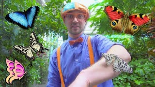 Download Blippi Explores the Pacific Science Center | Educational Videos for Toddlers Video
