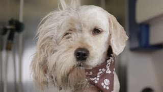 Download Homeless Dog Gets Makeover That Saves His Life! - Charlie Video