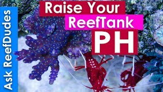 Download How to raise PH in a reef tank - PH explained and simplified AskReefDudes Video