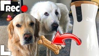 Download DOG SPY CAM REMOTE TREAT LAUNCHER Video