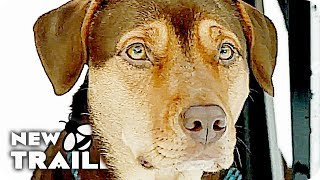 Download A DOG'S WAY HOME Trailer (2019) A Dogs Purpose Follow Up Video