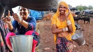 Download Buffalo Milking Village Life vlogs Video