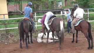 Download TOROS COLEADOS ENCERRONA SOCIA Video