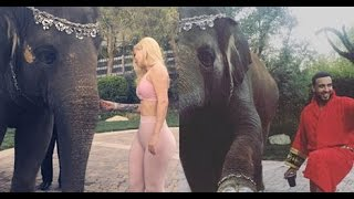 Download French Montana and Iggy Azalea RIDE on ELEPHANTS for His Birthday Video