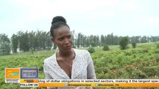 Download Business Digest focus on a Chilli Farm in Rwanda Video