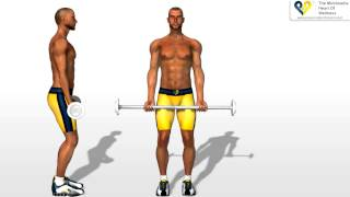Download Biceps Exercises Barbell Curls Video