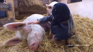 Download Die ″gefährliche″ Seite von Hof Butenland Video