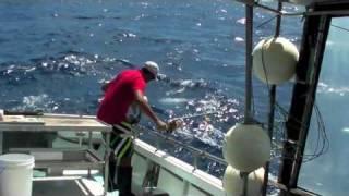 Download Deep Drop Commercial - Target Fishing Video