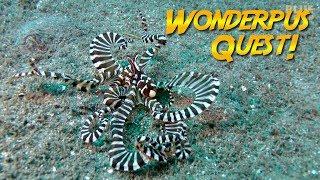Download Wunderpus Octopus Quest! | JONATHAN BIRD'S BLUE WORLD Video
