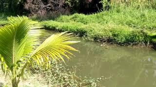 Download ขายที่ดิน โฉนด4-3-72ไร่สามพราน นครปฐม ที่ติดน้ำ ทำเลดี เจ้าของขายเอง 081-8282686 Video