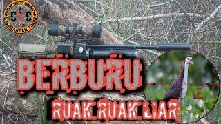 Download BERBURU PUNAI/RUAK RUAK Video