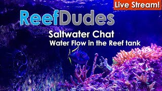 Download Flow in the ReefTank & Nutrient export - Water flow vs water movement Video
