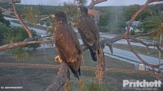 Download SWFL Eagles ~ Hurry Up, Dad. We Are Hungry! 4.17.18 Video