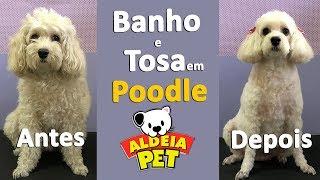 Download Banho e Tosa em Poodle (PASSO A PASSO) Video