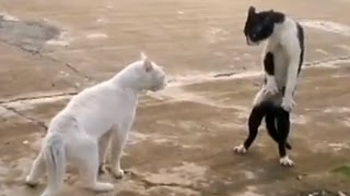 Download Funny Cats - Compilation Video