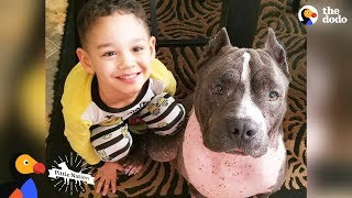 Download Street Dog From Puerto Rico Becomes Best Nanny To His Human Siblings | The Dodo Pittie Nation Video