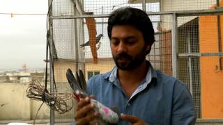 Download Monthly High Flying Pigeons Magazine Rashid Japani Video