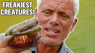Download Freakiest Creatures - River Monsters Video