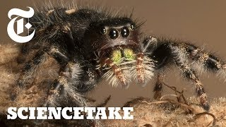Download How to Give a Spider an Eye Test | ScienceTake Video