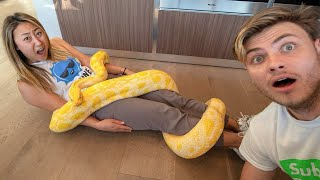 Download GIANT SNAKE TRIED TO EAT HER!! Video
